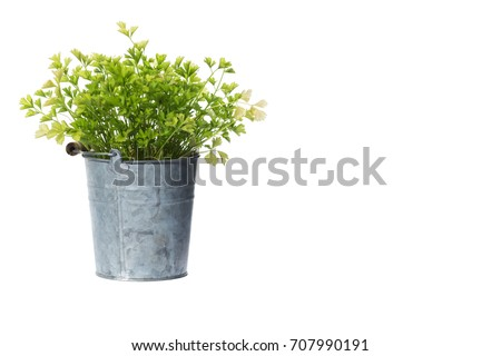 House Plant potted plant isolated on white-