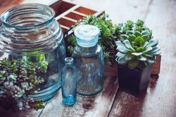 House plants, green succulents, old wooden box and blue vintage glass bottles on a wooden board, home gardening and decorating rustic style.