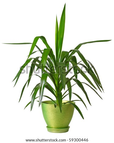 House plants isolated on white background