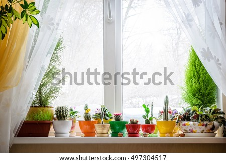 House plants on window #497304517
