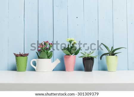 House plants. Succulents #301309379