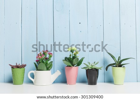 House plants. Succulents #301309400