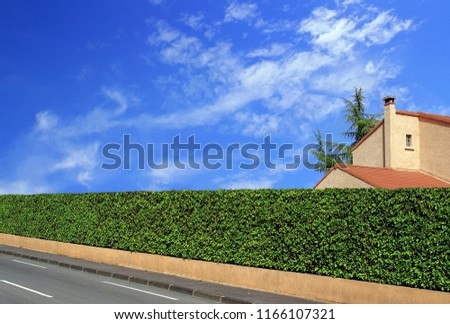 House ridge made of laurels surmounting a low wall.                   #1166107321