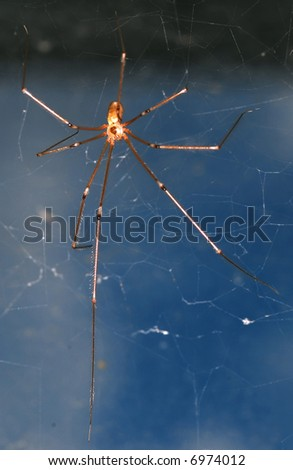 House spider on net