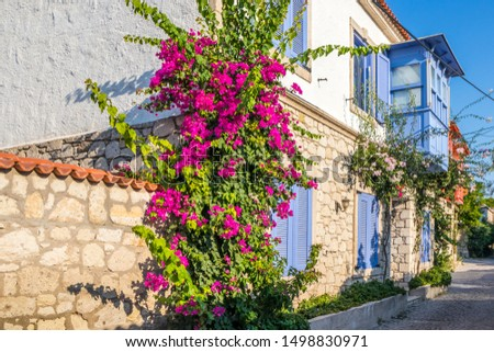 House with bougainvillaea and blue balcony window, Alacati, Izmir, Turkey #1498830971