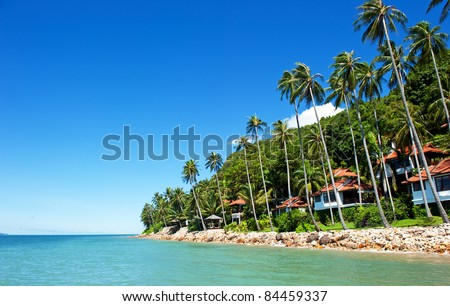 house with palm trees on the beach