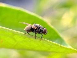 housefly on leaf garden housefly green leaves plant to sit housefly