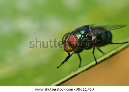 Housefly resting on green leaf #88611763