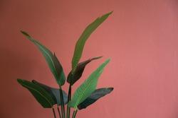 houseplant decorating interior red room.