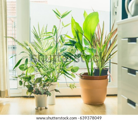 Houseplant Pots Arrangement at window in living room. Urban Living and styling with indoor plants. #639378049