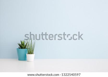 Houseplants in flowerpots on a table near bright blue wall #1322540597