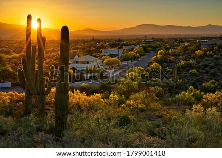 Houses between Saguaros in Tucson Arizona. Stockfoto ©