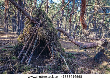 Hovel made of moss and branches in a forest in Mazowsze region of Poland