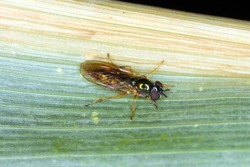 Hoverflie, also called flower flies or syrphid flies, make up the insect family Syrphidae.