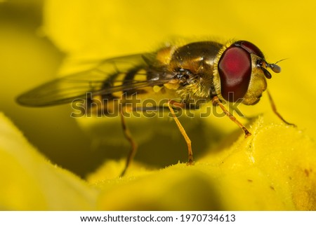 Hoverfly resting on plant leaves Stockfoto ©