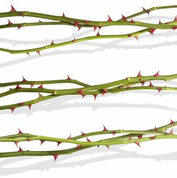 Hovering rose stems with clipping paths, for quick access without the shadows. The shadows have been photographed together, to appear real. All is isolated on white.