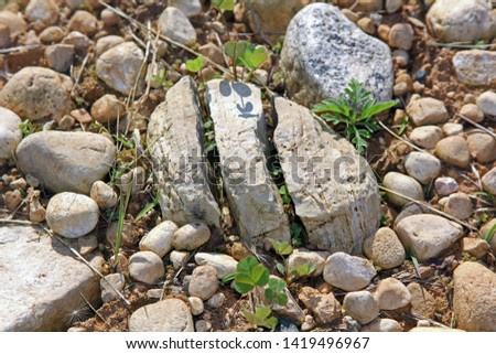 How nature breaks up rocks into smaller stones. Freezing and plant cracking example of pieces still in proximity, close. #1419496967