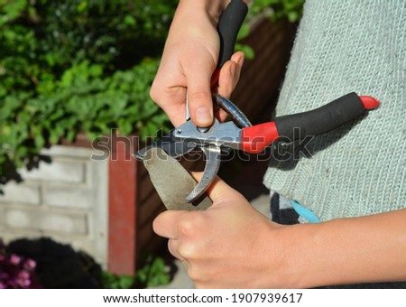 How to maintain secateurs. Pruning tools like secateurs will function better, last longer and be safer to use if clean, sharp and well-oiled. Stock photo ©