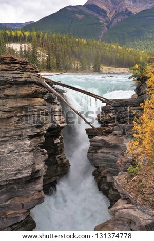 Howling Athabasca Falls in the Rocky Mountains of Canada. Cloudy day in Jasper National Park. Between the cliffs above the water stuck logs.