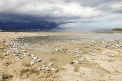 Hua Hin beach full of dead fish on the shore, dramatic stormy sky in the background (Thailand)