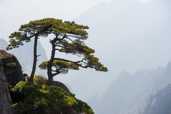 Huangshan Mountain Range - Anhui Province - China. Scenic landscape with steep cliffs and trees during a sunny day