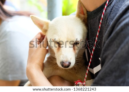 Hug a dog #1368221243