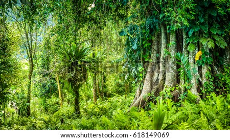 Huge Ancient Banyan Tree Covered By Vines In Bali Jungle Ez Canvas