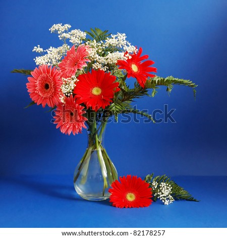 Huge bunch of red and pink gerber daisy on dark blue background