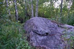 Huge buried stones in the forest
