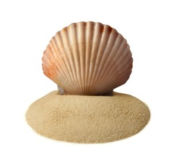 Huge clam on a sand pile isolated on white.