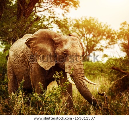 Huge elephant outdoors, big five, game drive, African nature, beautiful wild animal, national park, travel and tourism concept