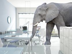 huge elephant walk in modern office