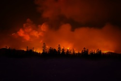 Huge fire in California. Burning forest.