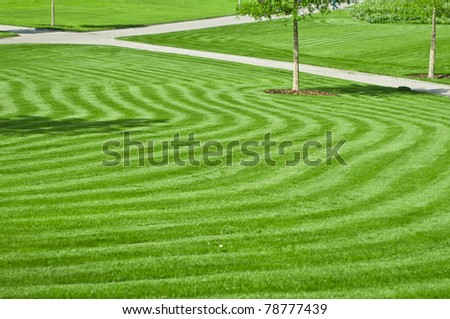 huge green lawn in the city park