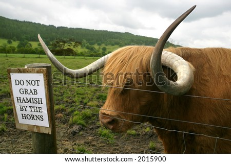 Huge Highland cow waiting for someone to ignore the sign and grab his horns.