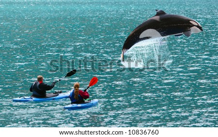 Huge killer whale jumped in front of two sea kayaks - Alaska USA