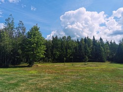 Huge lawn with green grass, big clouds and forest trees. Big backyard with beautiful flat landscape