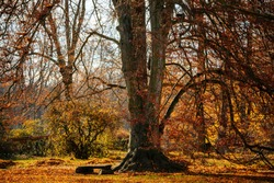 Huge old branchy tree with yellow and gold leaves in the castle park in sunny autumn day, Idyllic landscape with wooden bench in the garden, Veltrusy chateau, Czech republic, November 22, 2020