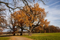 Huge old branchy tree with yellow and gold leaves in the castle park in sunny autumn day, Idyllic landscape in the garden, Veltrusy chateau, Central Bohemia, Czech republic, November 22, 2020
