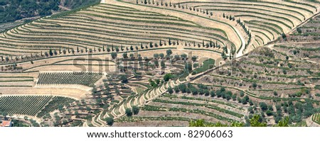 Huge panoramic view of the world famous vineyards of Porto wine.
