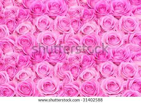 Huge pink roses floral bouquet background - stock photo