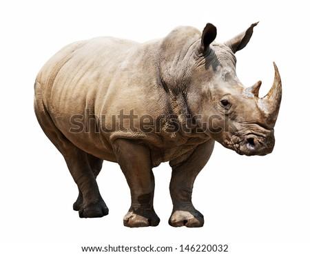 huge rhino isolated on white Сток-фото ©