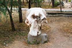 Huge skull of an elephant on a rock in the savanna of Tarangire National Park, in Tanzania