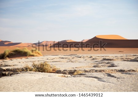 Huge solitude  crossing of the  vastness desert in the colorful and illuminated desert in Namibia #1465439012