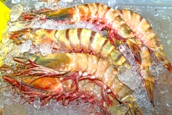 Huge tiger prawns on ice. Giant shrimp ready to cook. Shrimps on an Asian street market in a sea gypsy village on Rawai beach, Phuket Island, Thailand