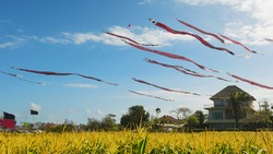 Huge Traditional Balinese kites with the long red black white striped tails and dragon head flying in sky over yellow field. Culture of island Bali people and tourist attraction in beautiful Indonesia