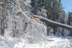 Huge tree causing damage on the power lines