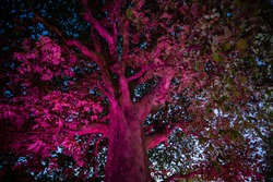 huge tree illuminated by magical multicolored light