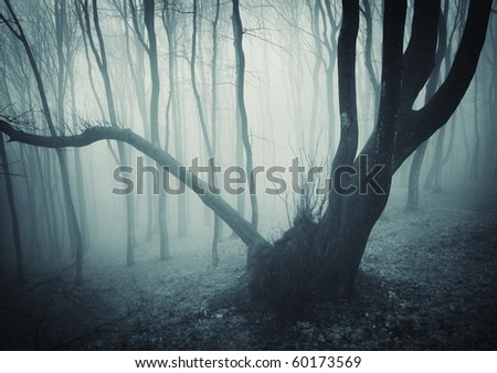 huge tree in a mysterious forest