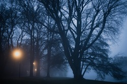 Huge trees in a city park in the evening blue hour. Diffused lights in fog. Stock photography.